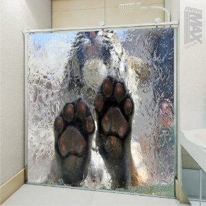 Adesivo Box - Tigre Empurrando Vidro