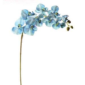 Orquídea Azul Planta Permanente 95 cm Bela Flor