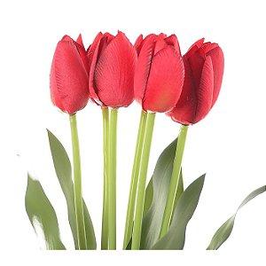 Buquê Tulipa Vermelho Permanente 40 cm Bela Flor
