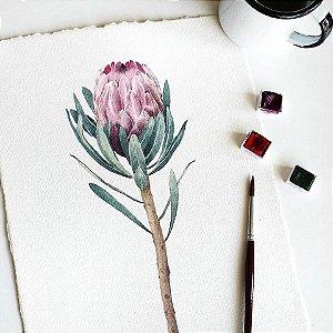 Protea | PRINT
