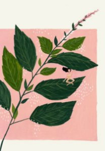 Manjericão | Print A4