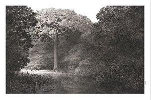 Poster No Coração da Floresta