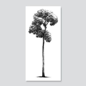 Jatobá – Serigrafia