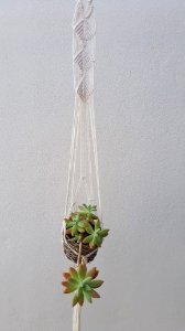 Suporte plantas P Concha