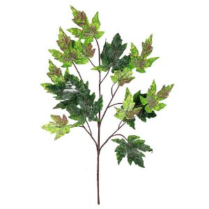 5 Unidades Galho de Folha Maple Plátano Bordo Canadá Verde