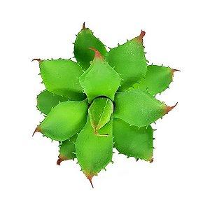 Suculenta Agave em Silicone Verde
