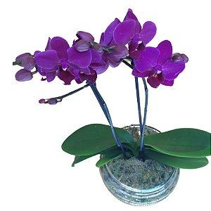 Orquídea no Vaso de Vidro