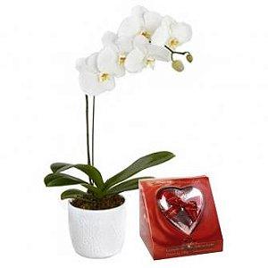 orquidea plantada + kopenhagem