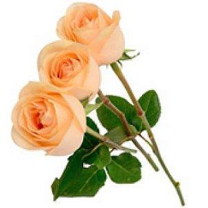 3 Rosas Champanhe
