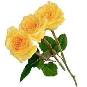3 Rosas Amarelas