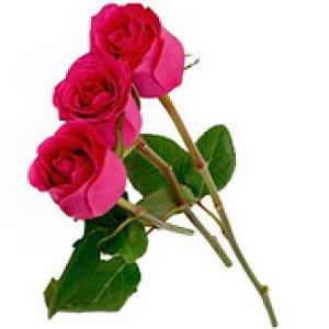 3 Rosas Pink