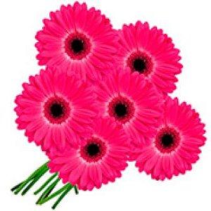 4 Gérbera Pink