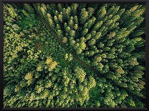 Quadro Superior da Floresta