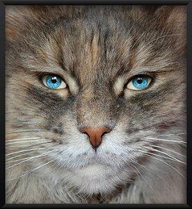 Quadro Gato Olhos Humano