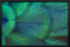 Quadro Pena de Pavão Verde