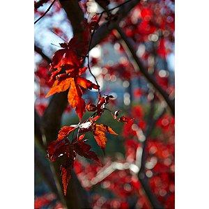 Quadro Decorativo Folhas Vermelhas