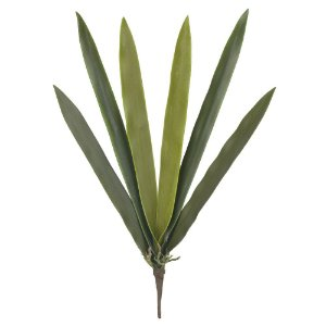 Folha Orquídea Cymbidium com Raiz (Haste com 6 Folhas) - 48cm