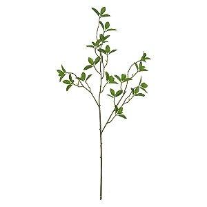 Haste de Ficus - 68cm