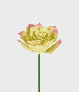 Suculenta Echeveria 11cm - Rosa