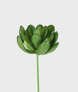 Suculenta Real 10cm - Verde