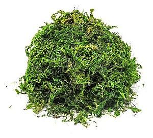 Musgo Verde - 1Kg