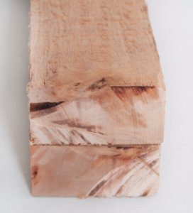 Eucalipto Saligna bruta 11x5cm – metro linear