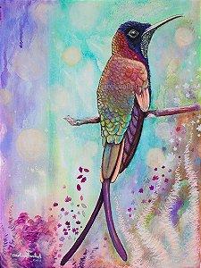 """""""Beija-flor-brilho-de-fogo""""- Poster impresso Full color Papel 250 g"""