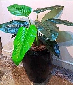 Planta Permanete Philo com Vaso