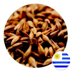 Malte Pilsen MOSA (Barley) - 100g