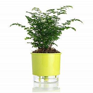 Vaso p/ Plantas Autoirrigável Tamanho Grande 22x18
