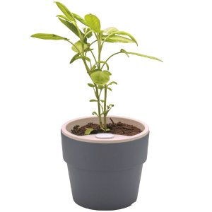 Vaso p/ Plantas Autoirrigável Tamanho Pequeno 12x11