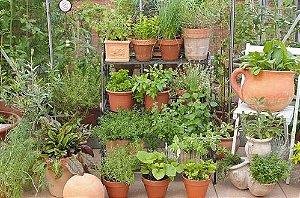 07/09 - [Workshop Presencial] - Horta e compostagem em pequenos espaços