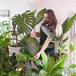 21/09 - [Bate-papo] - Urban Jungle: Como ter uma floresta dentro de casa (com Um Botânico no Apartamento)