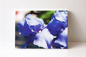 Quadro em Canvas Iris unguicularis claras ou roxas