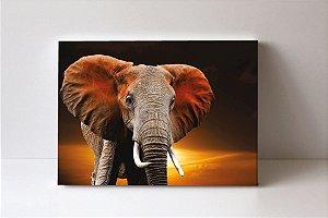 Quadro em Canvas Elefante