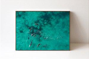 Quadro em Canvas Golfinhos 2