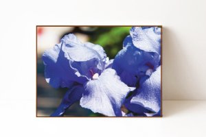 Quadro em Canvas Flor Lilás