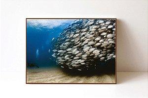 Quadro em Canvas Cardume de Peixes