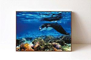 Quadro em Canvas Manta Ray Coral Reef