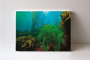 Quadro em Canvas Kelp Forest