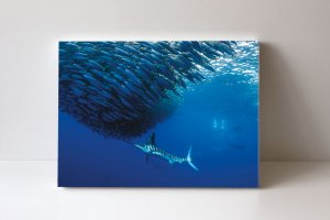 Quadro em Canvas Marlins