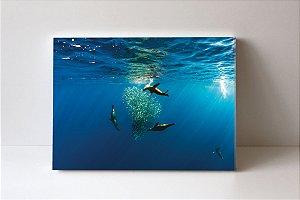 Quadro em Canvas Seals Eating
