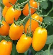 Tomate Grape Amarelo - 200g