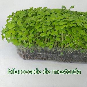 Microverde Mostarda 40g