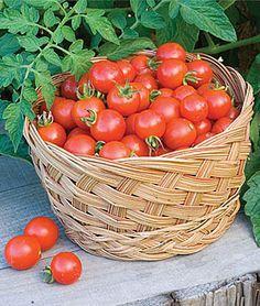 Tomate Cereja - 180g