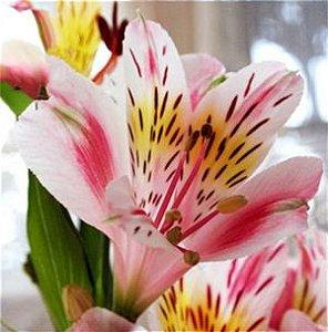 Cotador Flor Lírio 1
