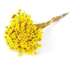 Ramo Sempre-Viva Amarela