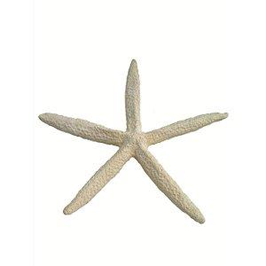 Estrela Do Mar Para Decoração
