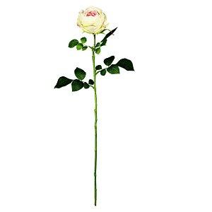 Galho De Rosa Cabbage