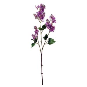 Galho De Lilac